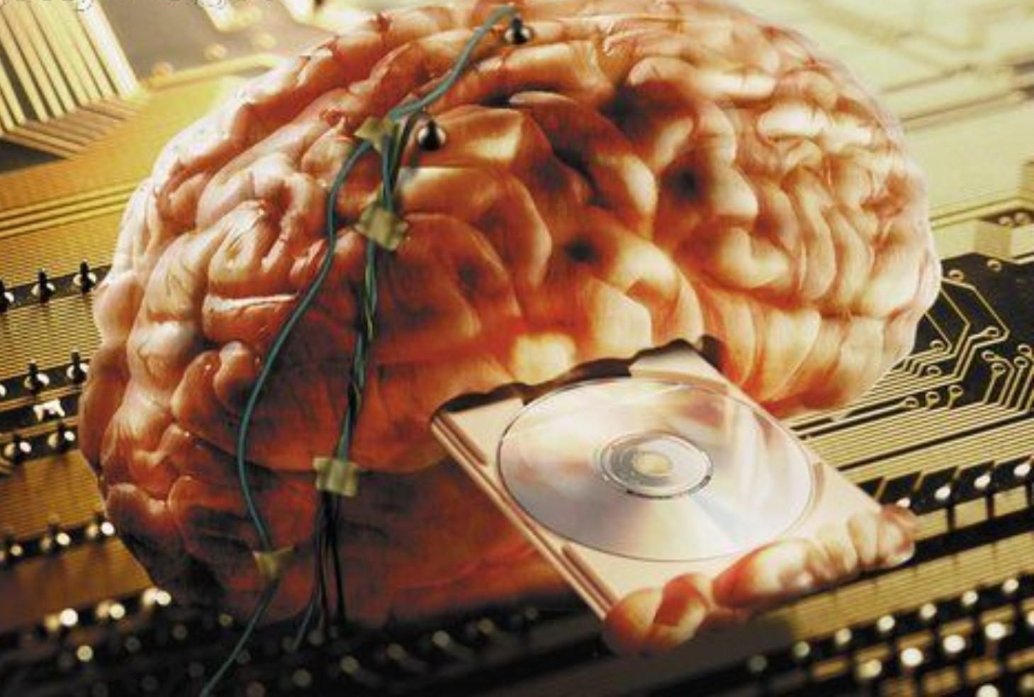 Фото мозг старого человека 6