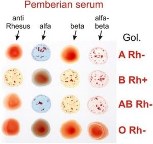 pembagian golongan darah