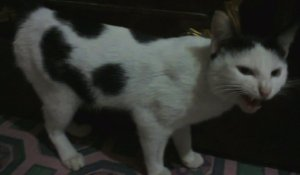 Popoh my Cats