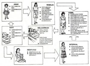 siklus kehamilan
