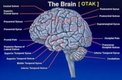 Cara-dan-Tips-Membuat-Otak-Agar-Menjadi-Ceras-dan-Pintar-e1403662022722