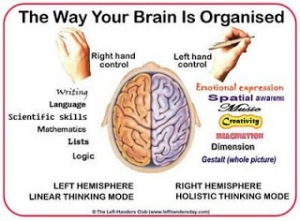 brainorg